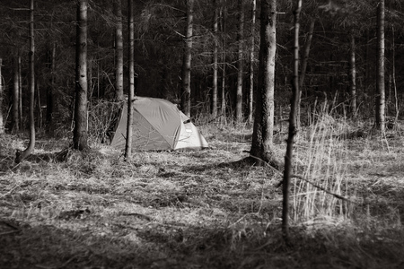 A tent in a spring forest