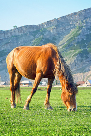 A brown horse on a green valley Imagens