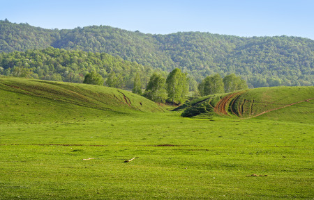 Spring green empty meadow with a forest on a hill as a background Imagens