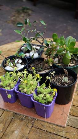 Close-up of plants in small pots on the table outdoors Banco de Imagens