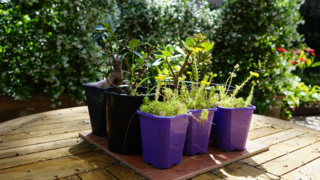 Potted Plants On The Table In Sunlit Backyard Patio Stock Photo   89052569