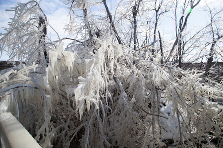 crystallize: Branches in the ice