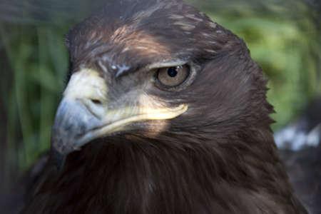 rigidity: eagle
