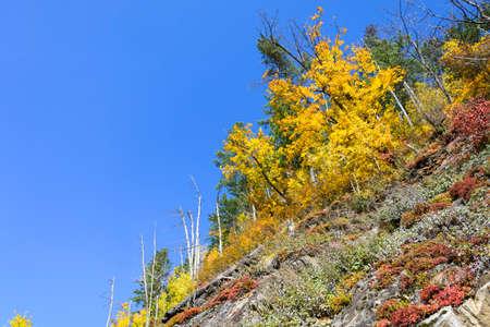 far eastern: The colors of autumn. Bright autumn colors in the Far Eastern taiga. Stock Photo