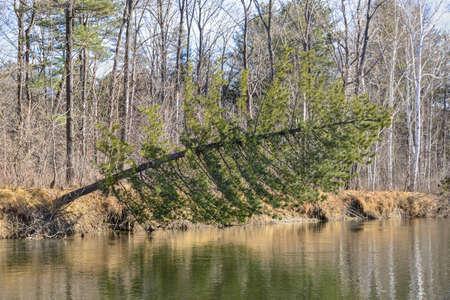 rinse: Fallen pine. Fallen pine, rinse with plenty of water.