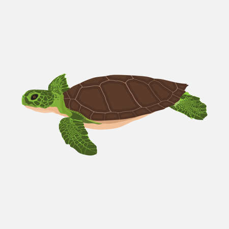 realistic turtle, ocean turtle, flat design, emblema vector image