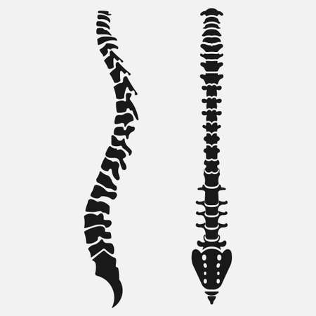 Spine emblem, anatomy human, clinic icon diagnostic center
