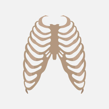thorax, human anatomy, the study of the body, medical icon, label, flat design, vector image 矢量图像