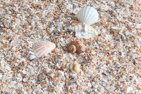 land shell: seashells