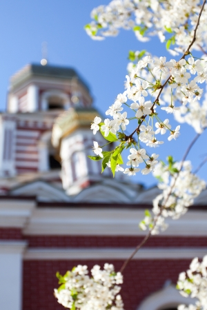 cherry tree near the church photo