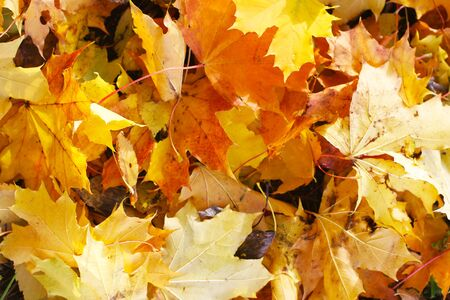 Texture of autumn leaves of different colors and shapes.