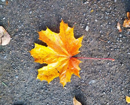 Photo of an autumn leaf of a tree on the surface of the earth from above.