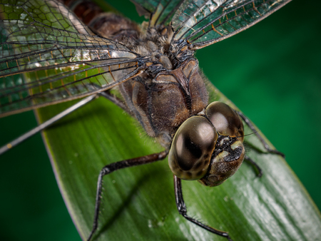 A picture of a dragonfly sitting on a sheet hd