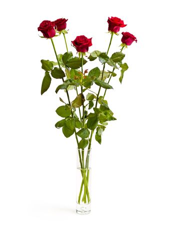five roses in a vase on white background Stock Photo
