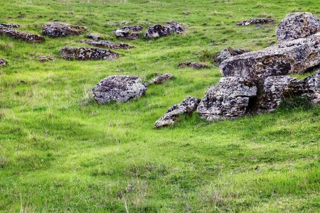 some rocks in a green field on summer Stock Photo