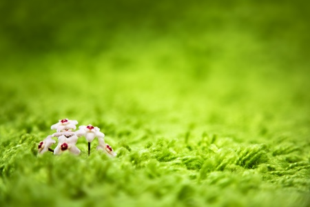 miniature flower into a carpet looking like grass