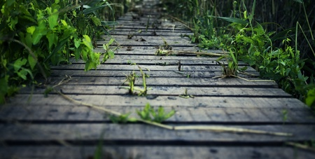close up of a wooden path with vegetation Stock Photo