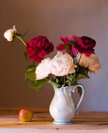 Beautiful peonies Stock Photo