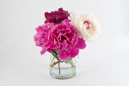 peonies in vase on white background photo