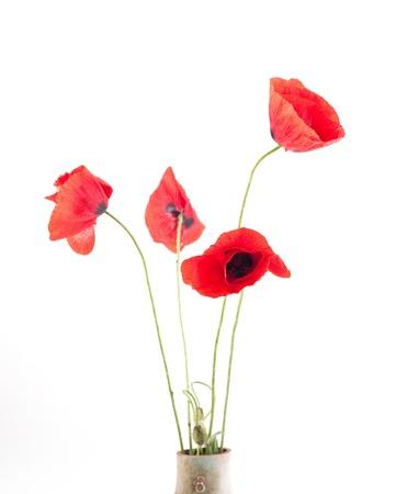 red poppyon white izolated background