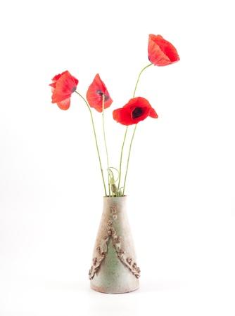 rode poppyon witte izolated achtergrond