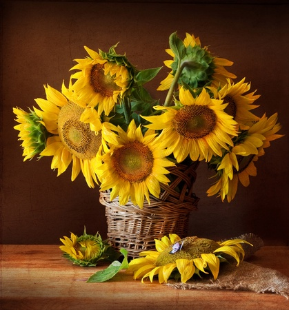 a sunflower: Still Life with Sunflower and Butterfly