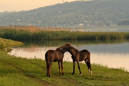 beautiful horse grazing on meadov Stock Photo - 8715927