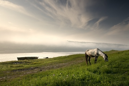 beautiful horse grazing on meadov photo