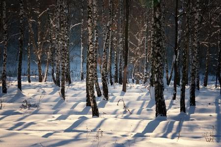 splendid scenery shiny winter snow photo