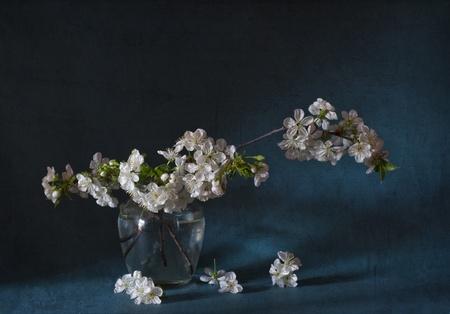 sprig of cherry blossom in vase photo