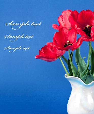 tulips in a vase on  background isolated photo