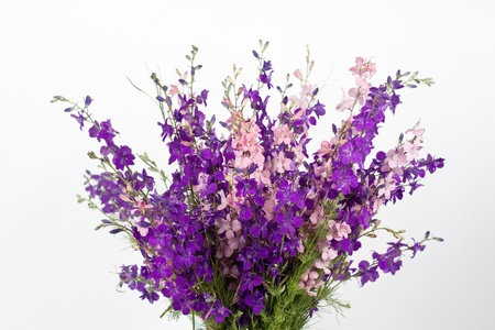 Field flowers on white Stock Photo - 13853981