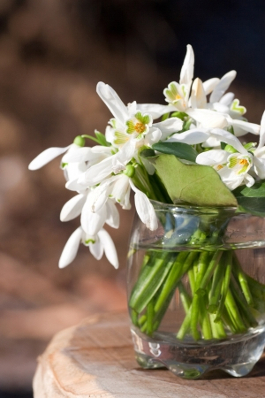 Bouquet of snowdrop flowers in glass vase photo