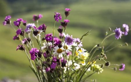 Boeket van wilde natuurlijke bloemen, selectieve aandacht