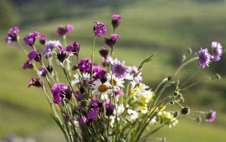 Bouquet of wild natural flowers, selective focus