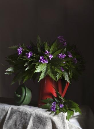 champ de fleurs: Nature morte avec fleurs des champs Banque d'images