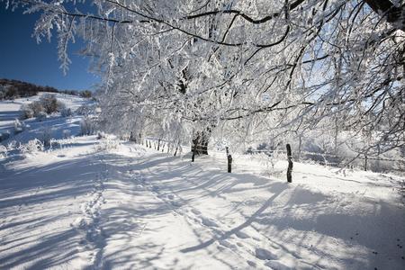 Winter landscape. Composition of nature Stock Photo