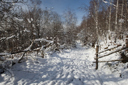 winter finland: Snowy landscape with birch trees Stock Photo