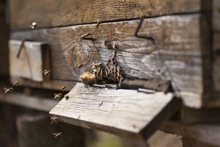 hives: bee hives around Stock Photo