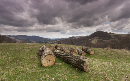 deforestation: illegal deforestation in the heart of the mountains