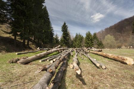 deforestacion: la deforestación ilegal en el corazón de las montañas