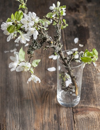 apple blossoms in glass vases on old wooden table