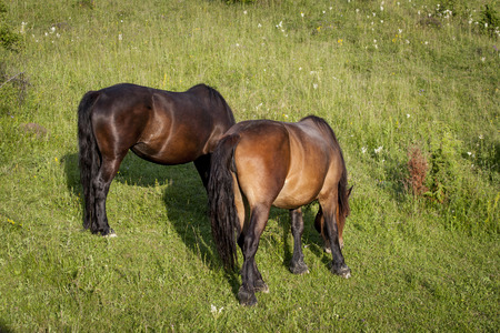 grazing: Horses grazing on field