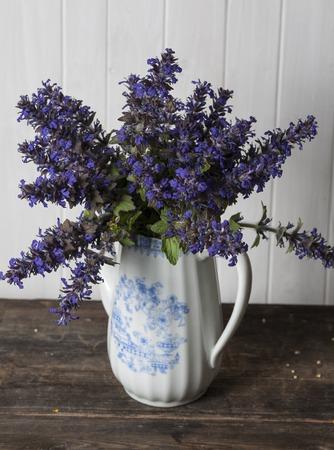 medicinal: Ajuga genevensis, medicinal wild flowers Stock Photo