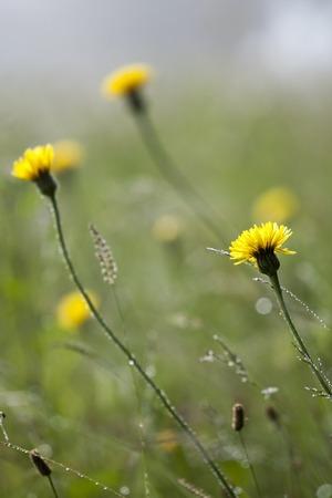dewy: wild flowers in dewy morning light summer Stock Photo