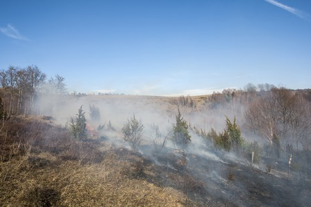 bushfire: forest fire in dry, Apuseni Mountains, Romania