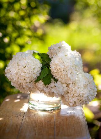 palle di neve: Viburnum white flowersIn the glass vase in the garden
