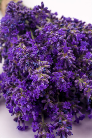 lavendin: Bunch of lavander isolated on white background.