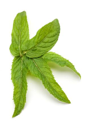 Fresh mint leaf isolated on white background. Stock Photo