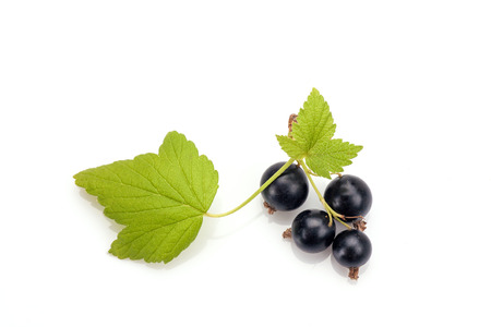 ribes: Blackcurrant in closeup isolated on white background. Stock Photo